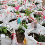 Bringing Local Food to Economically Challenged Neighborhoods