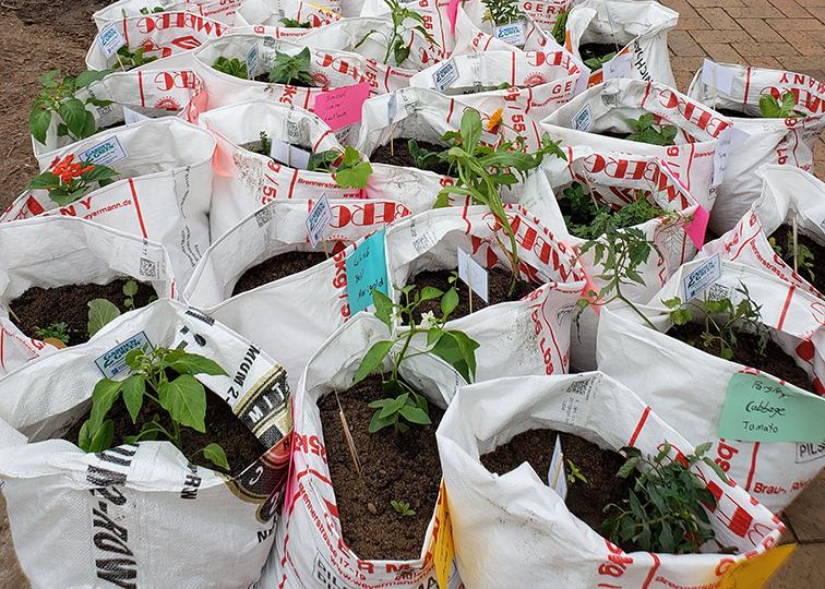 Garden plants in bags